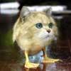ultranos: it's a duckcat (ZOMG DUCKCAT)