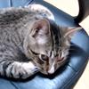 lluvia: Loki ‡ My Kitty ‡ ♥ (MY CHAIR MINE)