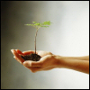 vividoceantides: Someone holding a seedling in their hands. (new growth, wrc: seedling)