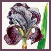 omnia_mutantur: (flower)