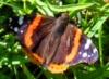 djonn: (butterfly)
