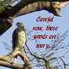 djonn: (woods)