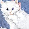 fallconsmate: (white cat icon)