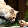 halfpastautumn: (Cat & Mouse.)