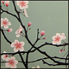 elf_fu: (cherry, blossoms) (Default)