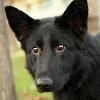blackdogstar: (padfoot)
