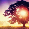 llywela: tree (Tree of Life)