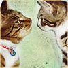 llywela: Poppy and Alfie (cats1 - Poppy & Alfie)