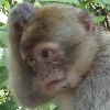 lenkka: (озадаченная обезьяна)