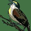 anansi133: (bird) (Default)