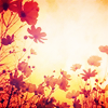 glori: (flowers and sun) (Default)