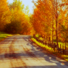 glori: (autumn road)