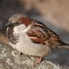 bersfish: (sparrow)