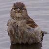 bersfish: (sparrowpool)