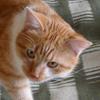 bersfish: (cat)