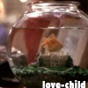 thisiszircon: Gail the goldfish (west wing)