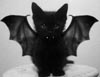 hippie_chick: (Catbat!)