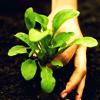 ada_c: Plant (Plant)