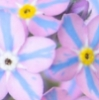 cincinnatus_c: (forgetmenots)