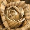 dauntperplexity: (Music)