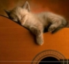 dana_history: (кошка-гитара)