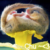 dragontrap: (Chu~)
