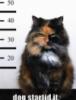 sammydragoncat: ()