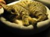 devohoneybee: pixel kitty (pixel kitty)