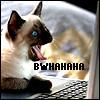 aglarien: (12Bwhahahaha Siamese Cat by Juno_icons)