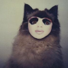 stealthily: a burmese cat in a creepy person mask (cat in a mask (unheimlich))