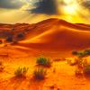chiefofsinners: (desert)