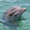 margelaene: (Дельфин)