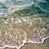 unmowngrass: a closeup of the seashore with the sand in the lower part of the picture (Default)