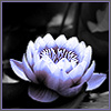 tempested_bird: (Dark Lotus)