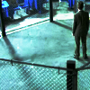 lilly_c: (Robbie - fighting cage)