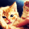 orm: a kitten exhibiting a comically bewildered reaction to having its tummy rubbed (BLERGH?: cat)