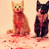 orm: two adorable kittens stained with gore (GORE: cats)