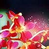fenellaevangela: pink flowers (Default)