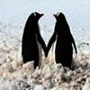 ladyknightanka: (Penguins2)