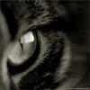 springmelody: (eye)