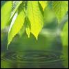 springmelody: (fresh)