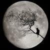 springmelody: (moon and cat)