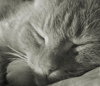 springmelody: (sleeping cat)