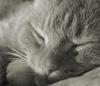 springmelody: (sleeping cat)