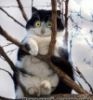 olmas: (cat)