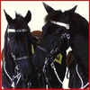 cmshaw: RCMP Musical Ride: horses kiss by touching noses (Kiss)