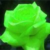 jadessrose: (jade, rose)