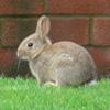 lizziec: (animals - bunny!)