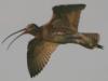 birdsofshore: (flying)