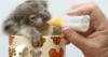 wild_irises: (koala, cute)